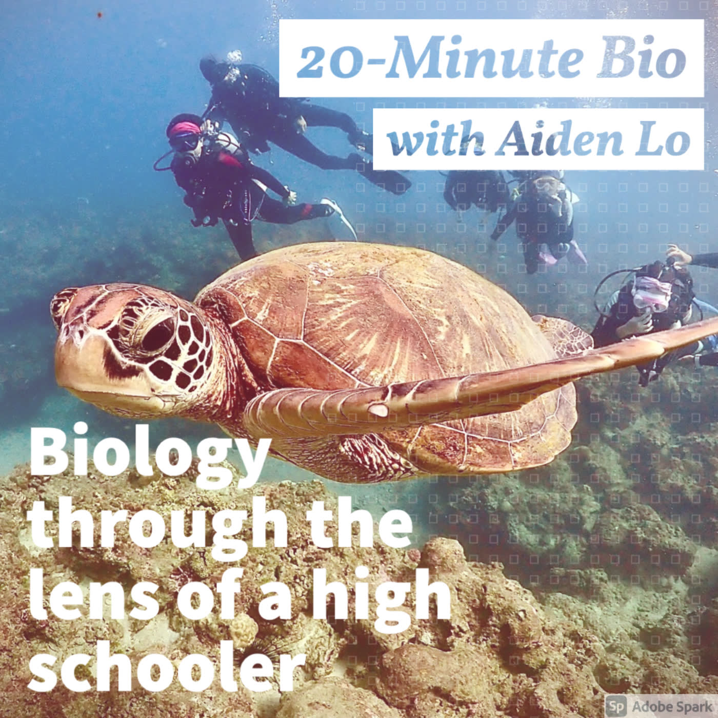 Uncovering Xiaoliuqiu: Sea Turtles, Scuba Diving, the Ocean [Part 1]