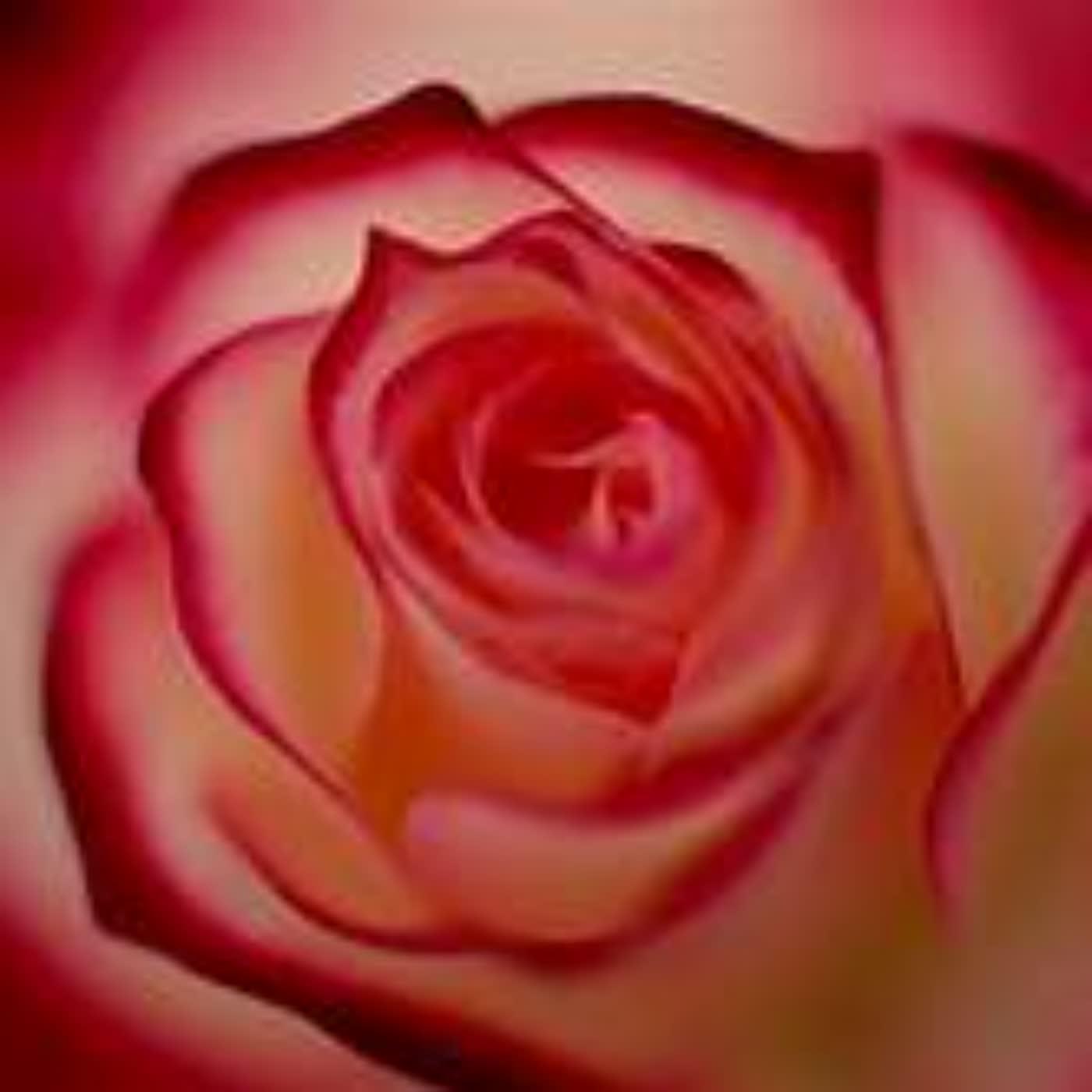 野薔薇秘錄