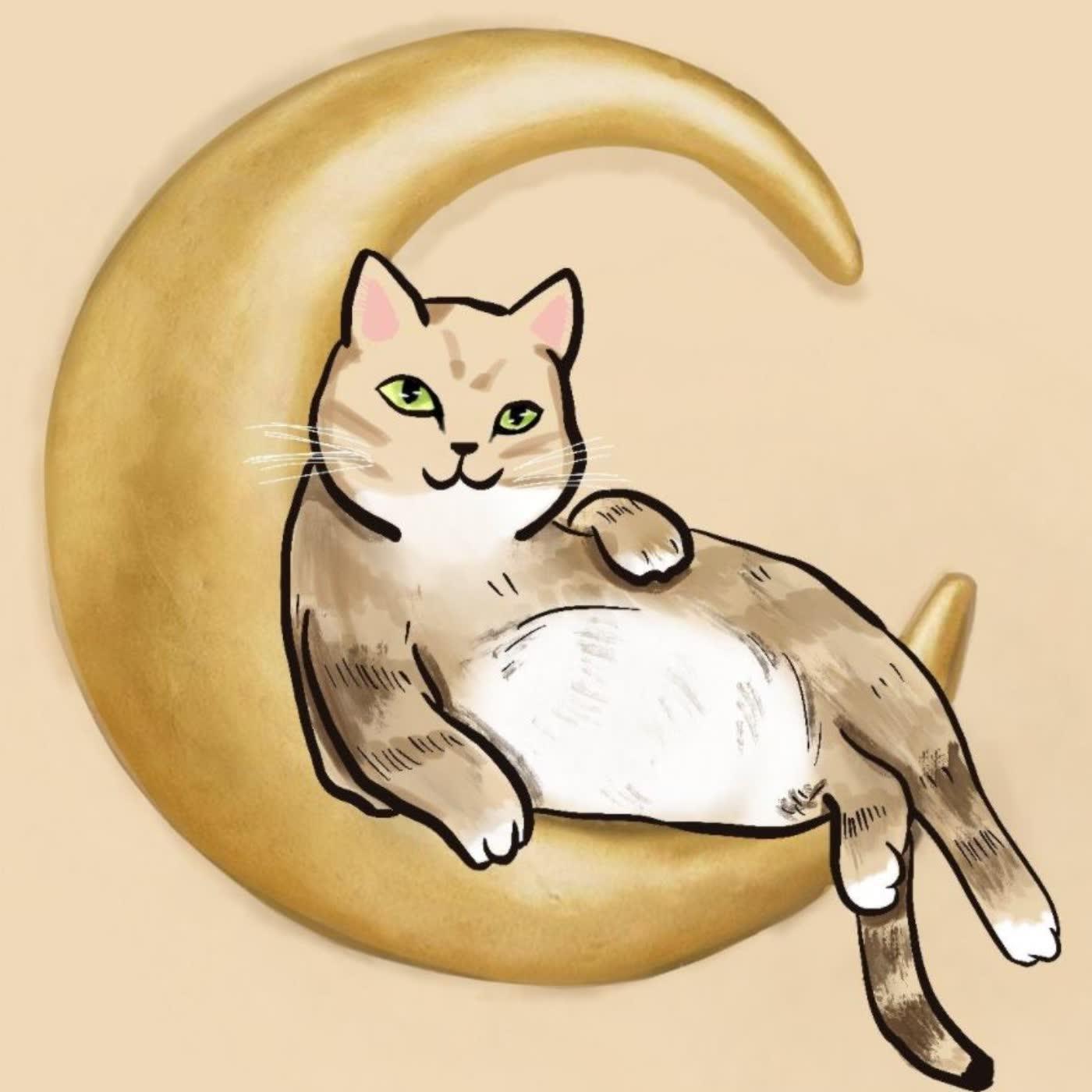 月貓的投資故事