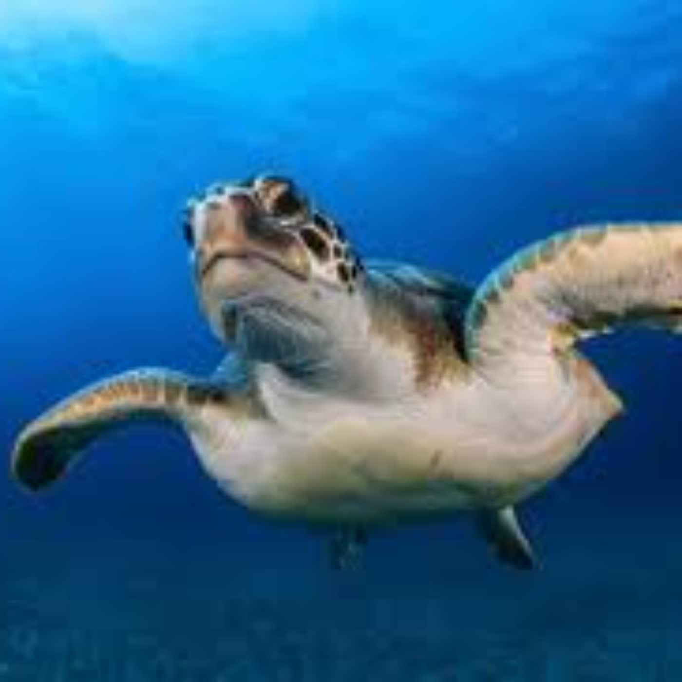 海洋環境污染與保護