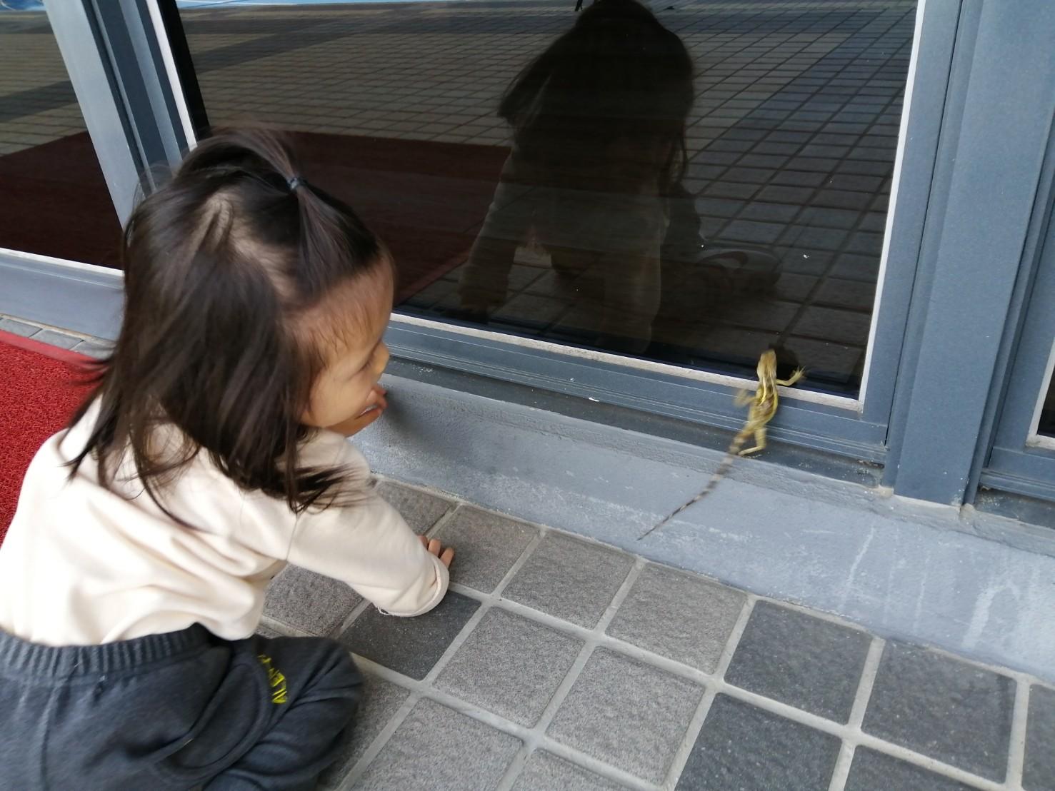 旅喵寶貝 巧遇蜥蜴