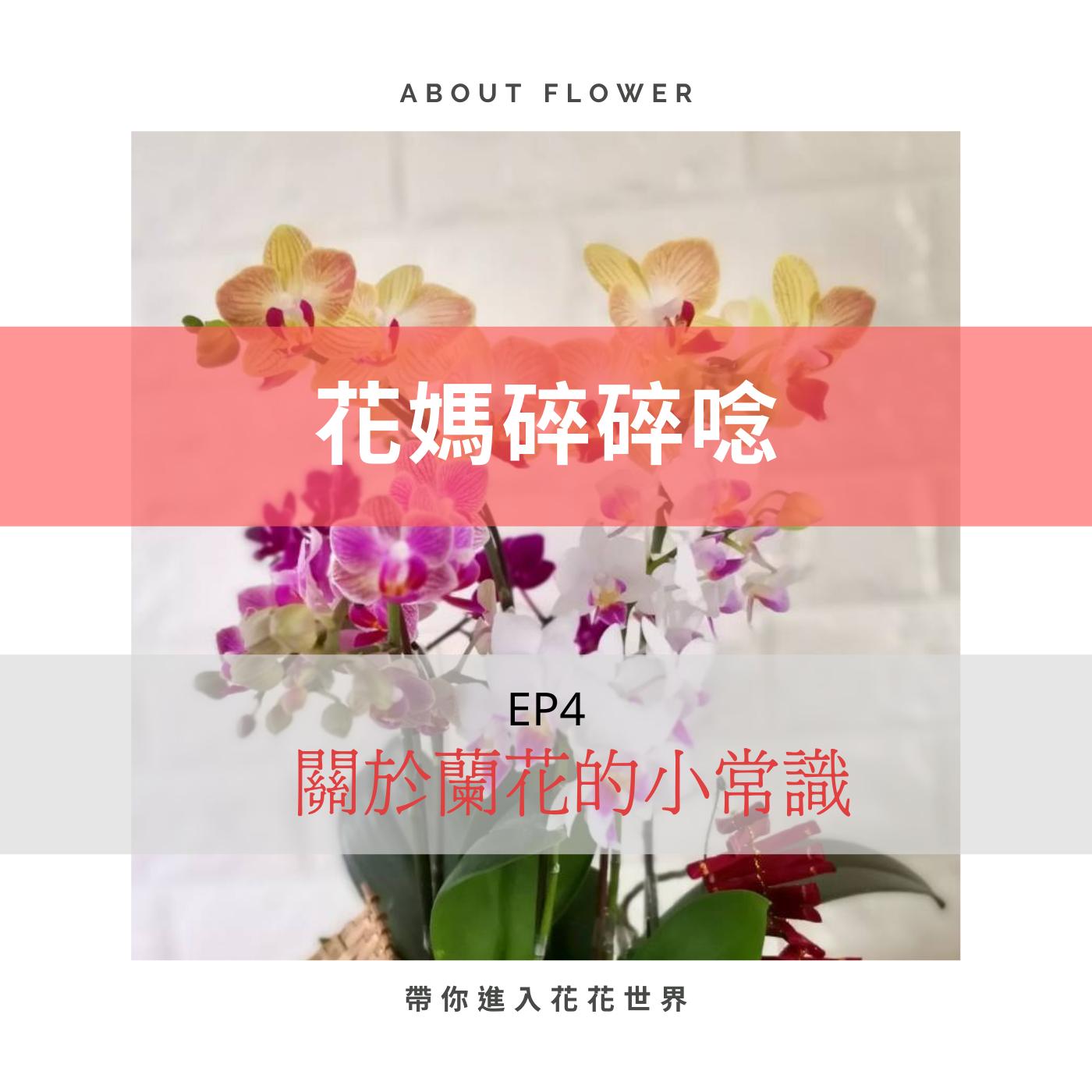 EP4 關於蘭花的小常識
