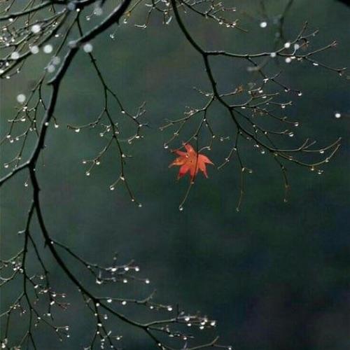 《竊竊詩語·繪聲繪影》詩歌朗讀系列:慧娟〈一千零一葉〉