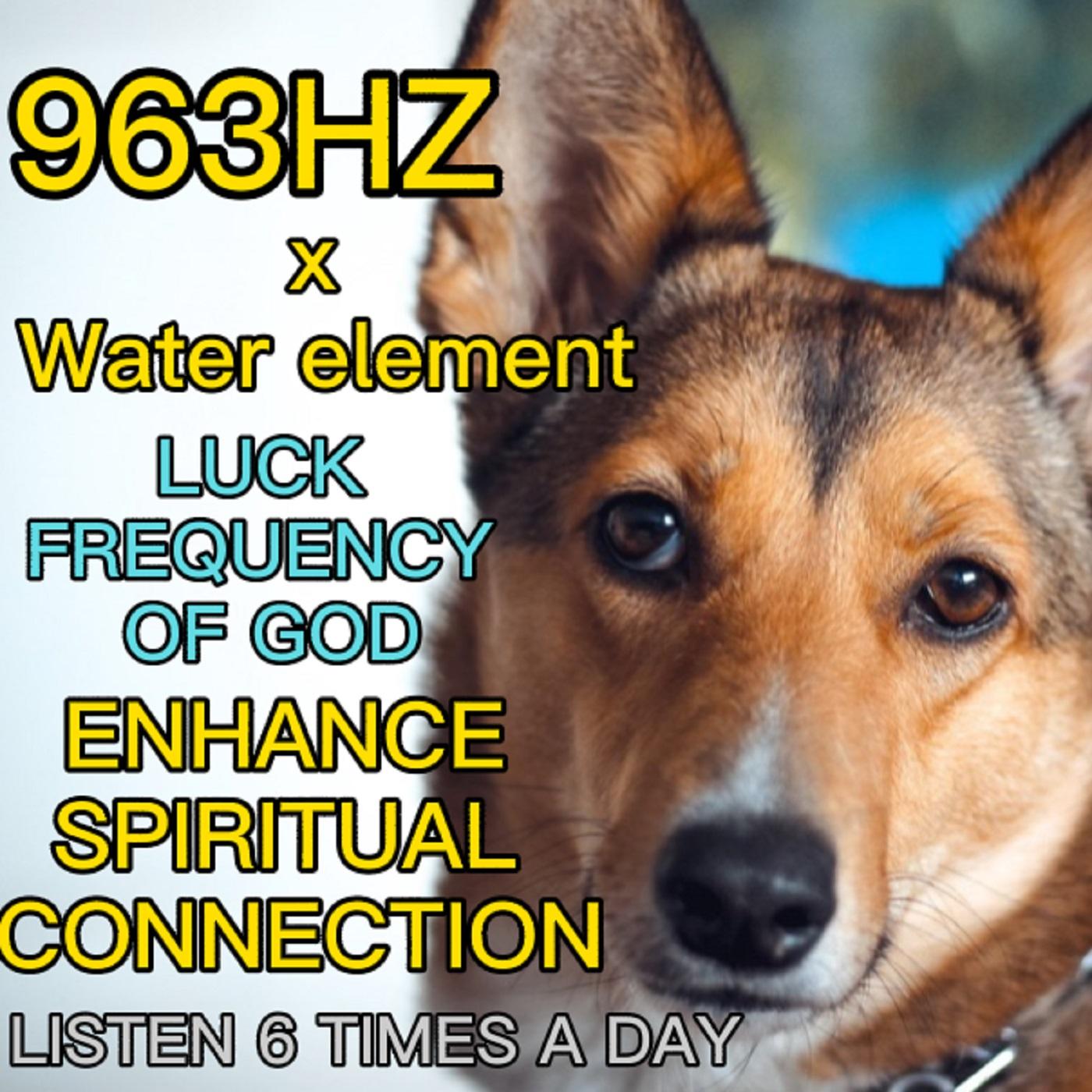 【每日聆聽6次】毛孩 狗 貓 提升靈性連結 精神力 水元素 寵物pet 963HZ x water connect spirituality