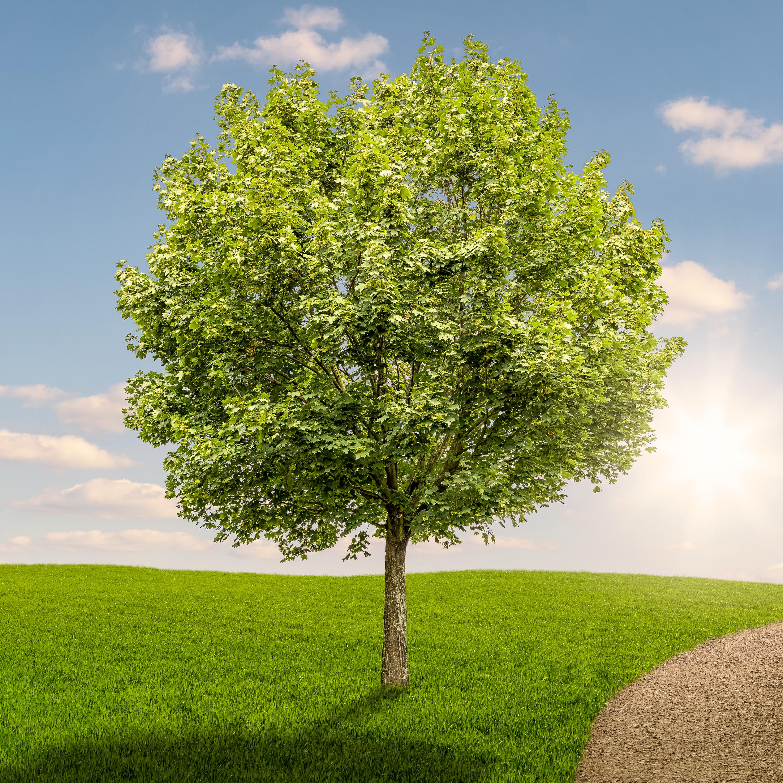 冥想練習13. 讓潛意識主動告別爛桃花!照顧好你的感情樹