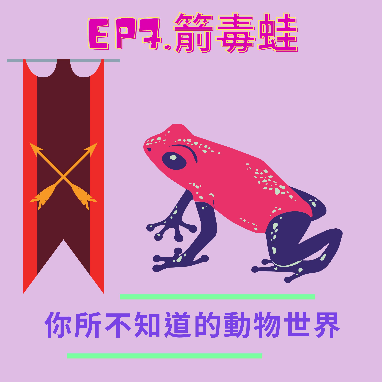 EP.7 猛毒之箭-箭毒蛙