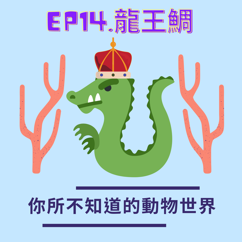 EP.14 龍王的藍寶石-龍王鯛