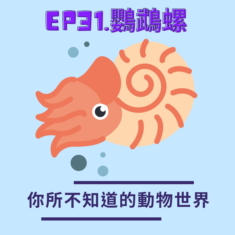 EP.31 記錄著過去與現在的海中相機-鸚鵡螺