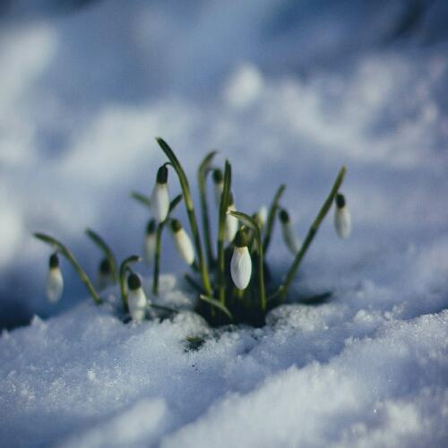 第1集:春分許願+開啟內在許願機