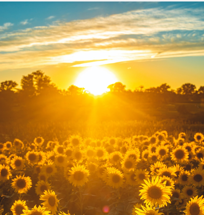 金色陽光冥想✨太陽神經叢平衡,穩固自信心、強化行動力