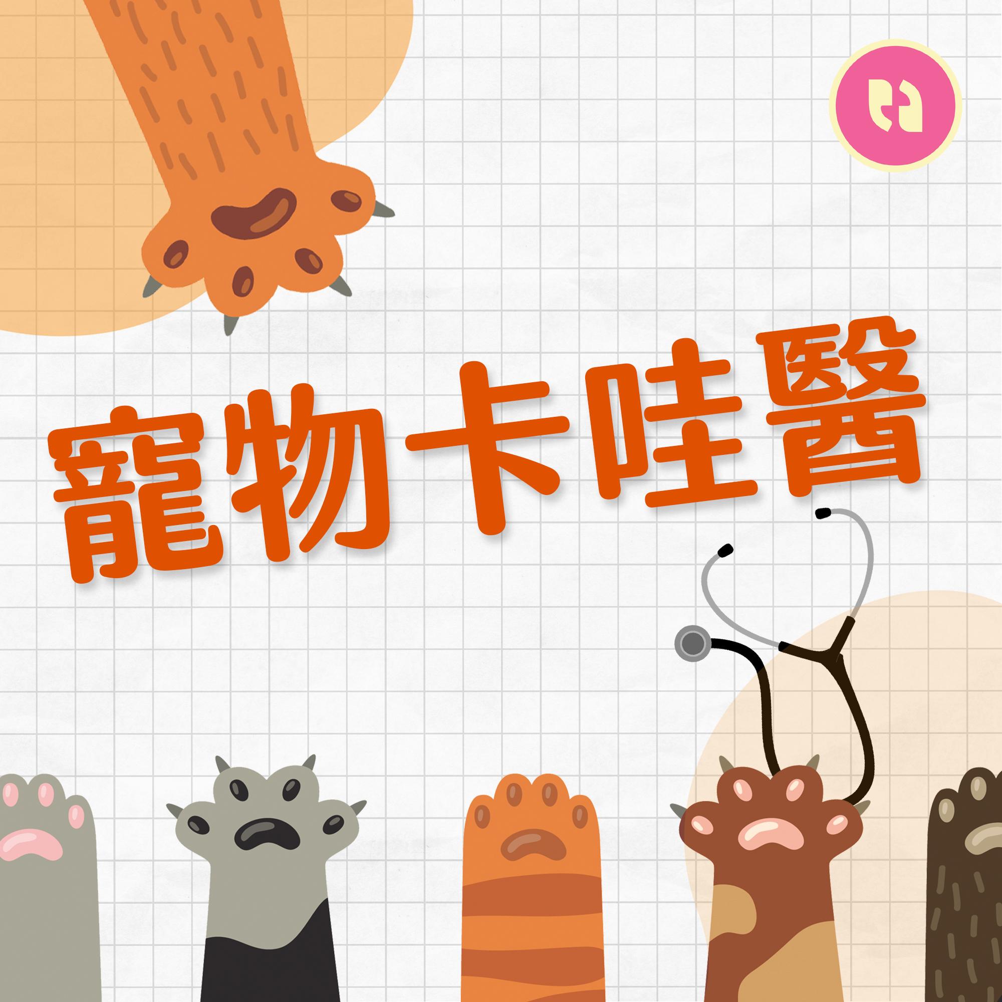 寵物卡哇醫|守護野生動物的健康!動物園獸醫師是高危險工作!