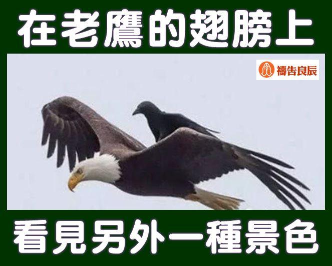 在老鷹的翅膀上,看見另外一種景色