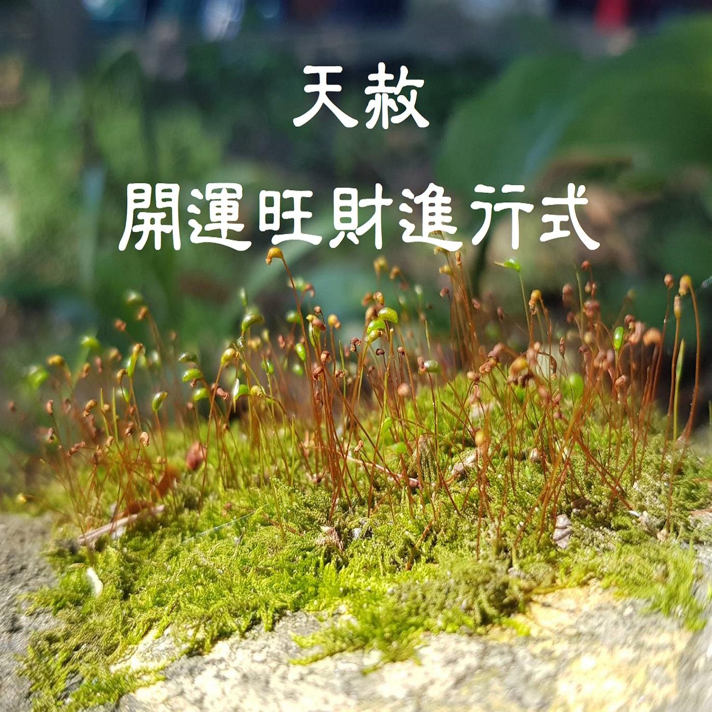 03/31(三)初十九 阿明師兄報好運 (旺運財神法會進行中)