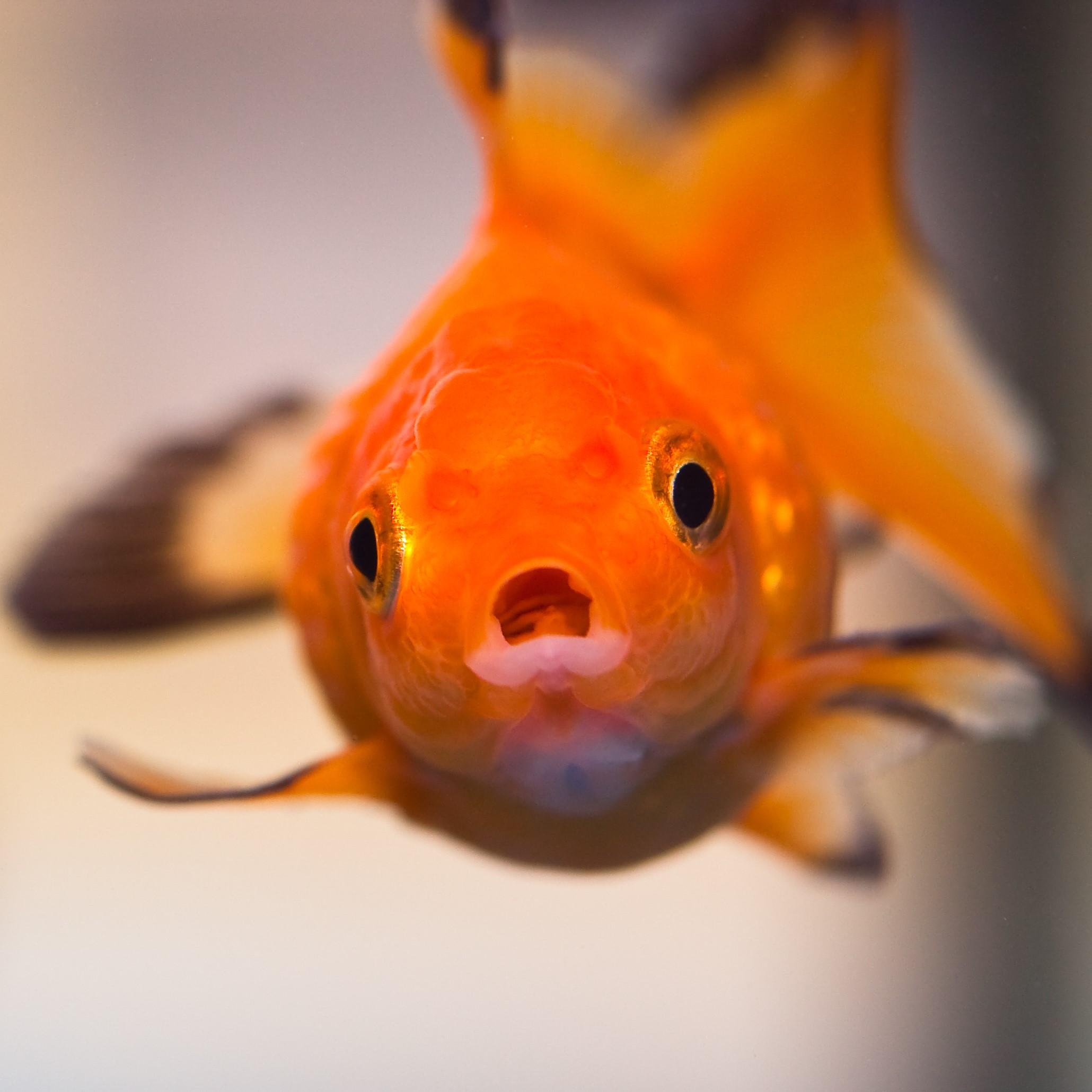 Ep1.30歲的樣子 金先生&魚先生