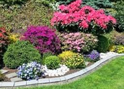 第22集 全球逐漸流行的園藝治療是什麼?要如何成為一個合格的園藝治療師?