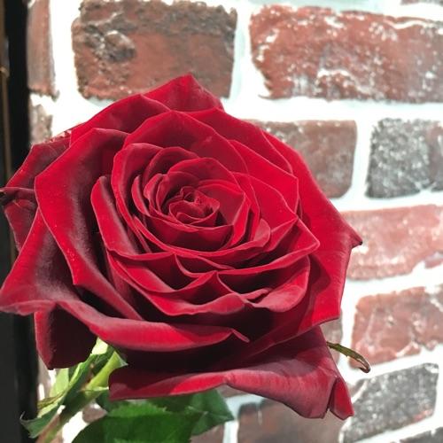 她 總是買一朵 紅玫瑰