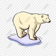 抱歉了熊熊,但我真的需要那酷酷的東西